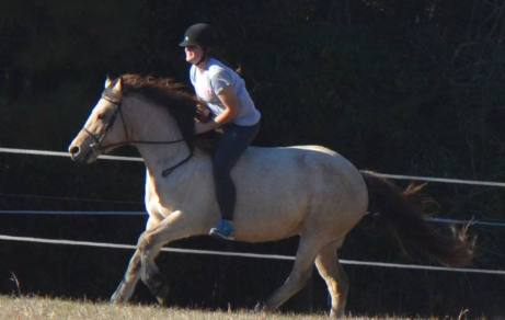 Sydney and Queen galloping up the hillside
