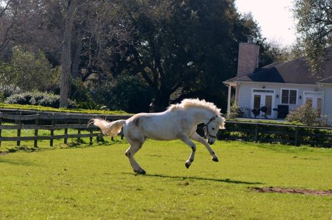 Sly playing in his field at Tavia.