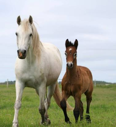 Inver Lor and her 2013 colt by Wildwych Wily Casanova, Blue Rock Fintan