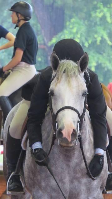 Bella horseshowing