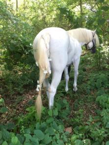 Alexandra's Fairy pony, Sly