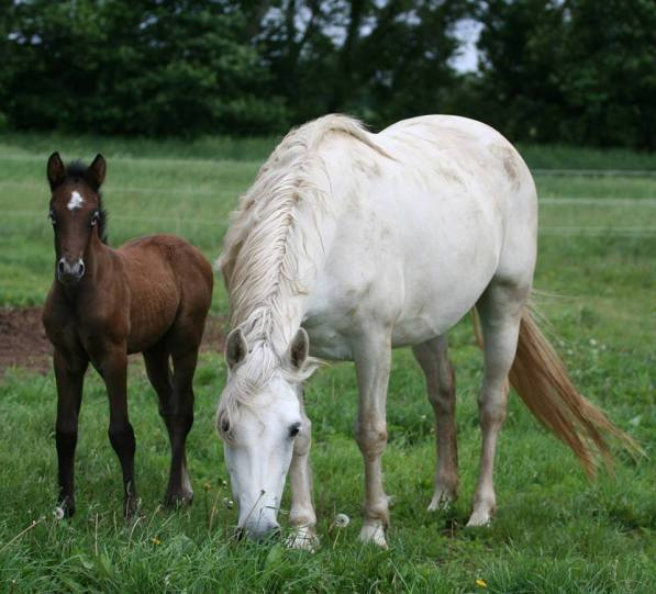 Blue Rock Nuala with her dam, *Grey Pearl