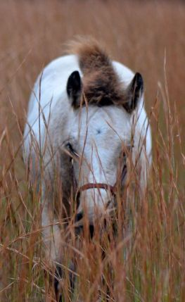 Holden in the autumn grasses