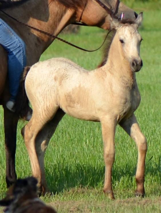 Holden, 6 weeks