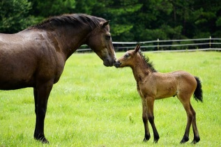 Clemma and her 2017 colt, Blackwing A Wrinkle in Time