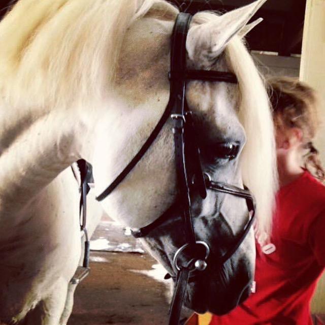 Connemara stallion Wildwych Wily Casanova