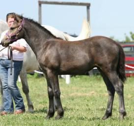 Blue Rock Maria, 2010 filly by Wildwych Eclipse