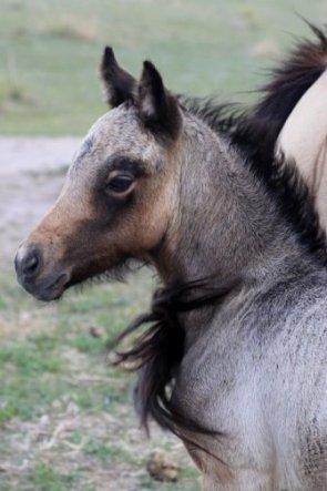 Penny as a foal