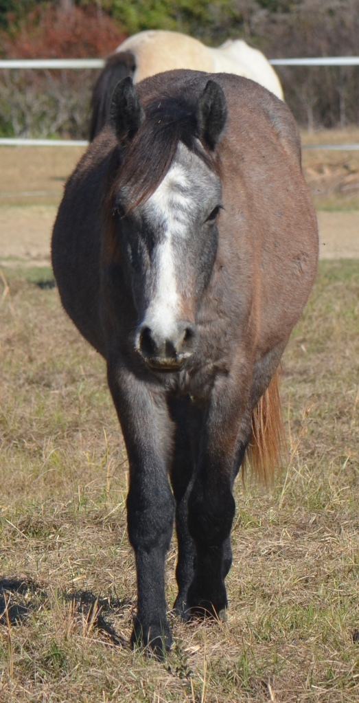 Ace as a yearling, Dec 2016