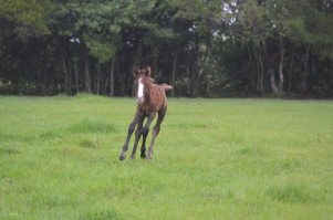 Rosco, four days old