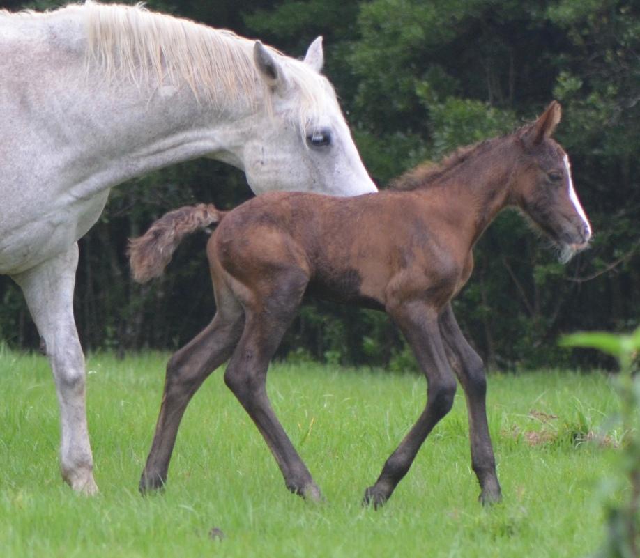 Rosco, 4 days old