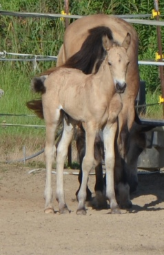 Blackwing The Lightning Thief at ten days old