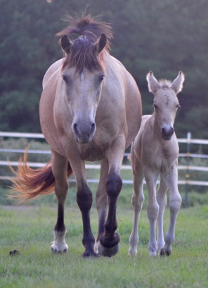 *Fairyhill Queen and her foal, Grover